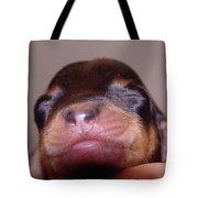 Newborn Puppy   Tote Bag
