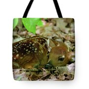 Newborn White-tailed Deer Fawn Tote Bag