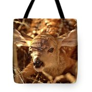 Newly Born Fawn Hiding In A Saskatchewan Field Tote Bag