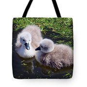 Newly Hatched Cygnets At Abbotsbury Tote Bag