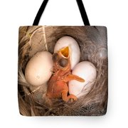 Newly Hatched Tree Swallow Tote Bag