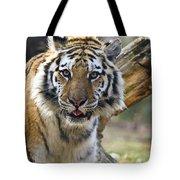 Nice Kitty Tote Bag