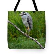 Night Heron On Slim Branch Tote Bag