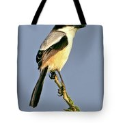 Philippine Falconet Tote Bag