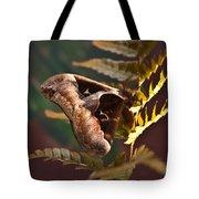 Nocturnal Moth Tote Bag