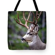 Non-typical Mule Deer Buck Portrait. Tote Bag
