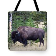 North American Buffalo Grazing Near Edge Of Woods During Late Su Tote Bag