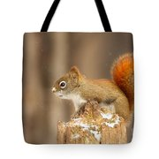 North American Red Squirrel In Winter Tote Bag