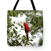Northern Cardinal - In The Wind Tote Bag