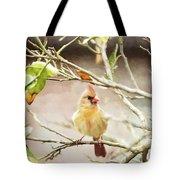 Northern Cardinal Female - Digital Painting Tote Bag