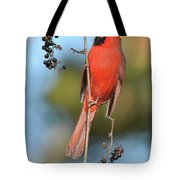Northern Cardinal With Berry Tote Bag