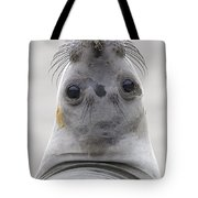 Northern Elephant Seal Looking Back Tote Bag by Ingo Arndt