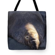 Northern Elephant Seal Tote Bag