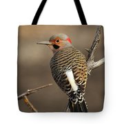 Northern Flicker On Branch Tote Bag