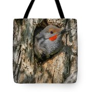 Northern Flicker Pokes His Head Out Tote Bag