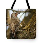 Northern Flicker Woodpecker 1 Tote Bag