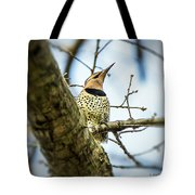 Northern Flicker - Woodpecker Tote Bag