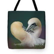 Northern Gannets Tote Bag