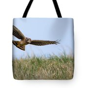 Northern Harrier Hawk Scouring The Field Tote Bag