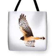Northern Harrier  Tote Bag