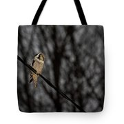 Northern Hawk-owl 22 Tote Bag