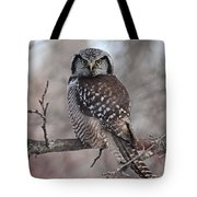 Northern Hawk Owl 9470 Tote Bag