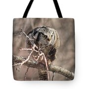 Northern Hawk Owl Having Lunch 9450 Tote Bag