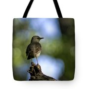 Northern Mockingbird At Quarry Lake Tote Bag