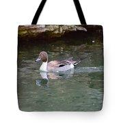 Northern Pintail Tote Bag