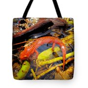 Northern Red Brook Tote Bag