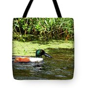 Northern Shoveler Drake Tote Bag