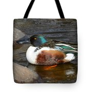Northern Shoveler Duck Drake Tote Bag