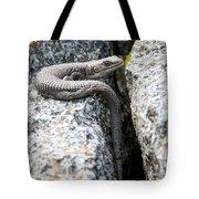 Northwestern Alligator Lizard 2 Tote Bag
