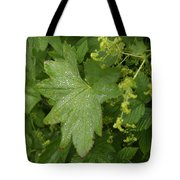 Norway, Hidra, Water Droplets Tote Bag