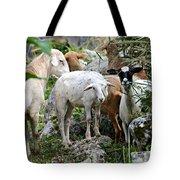 Nosy Sheep Tote Bag