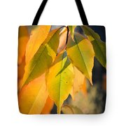 November Colors Tote Bag