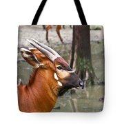 Nyala At The Watering Hole Tote Bag