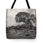Oak In Rock Field Tote Bag