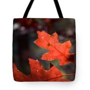 Oak Leaves Aglow Tote Bag