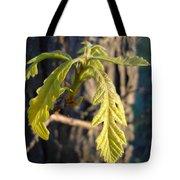 Oak Leaves In May Dawn Light Tote Bag
