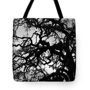 Oak Tree In Winter Detail - Amador County, California Tote Bag