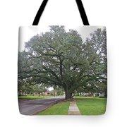 Oak  Tree  Jennings  Louisiana Tote Bag