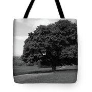 Oak Tree - Killarney National Park Tote Bag