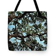 Oak Tree Three Tote Bag