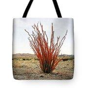 Ocotillo Plant Tote Bag