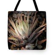 Octo Cacti Tote Bag