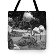 Odd Bird Out In Black And White Tote Bag
