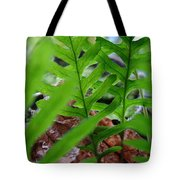 Office Art Forest Ferns Green Fern Giclee Prints Baslee Troutman Tote Bag