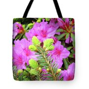 Office Art Pine Conifer Pink Azalea Flowers 38 Azaleas Giclee Art Prints Baslee Troutman Tote Bag