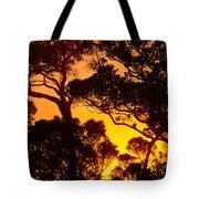 Ohia Trees At Sunset Tote Bag